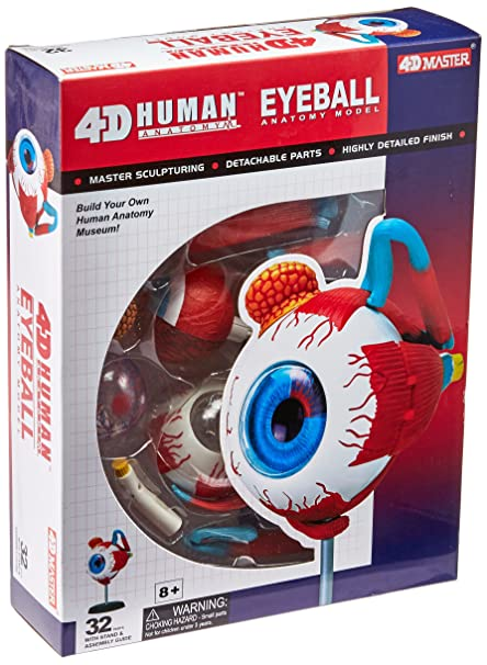 Amazon.com: TEDCO Human Anatomy - Eyeball Anatomy Model: Toys & Games