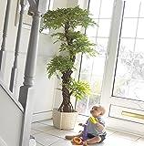 Élégant Luxury artificielle japonaise Fruticosa Arbre, Grand Replica / Faux plantes d'intérieur - 5 pi 4 po / 165cm de hauteur. Parfait pour la maison ou le bureau