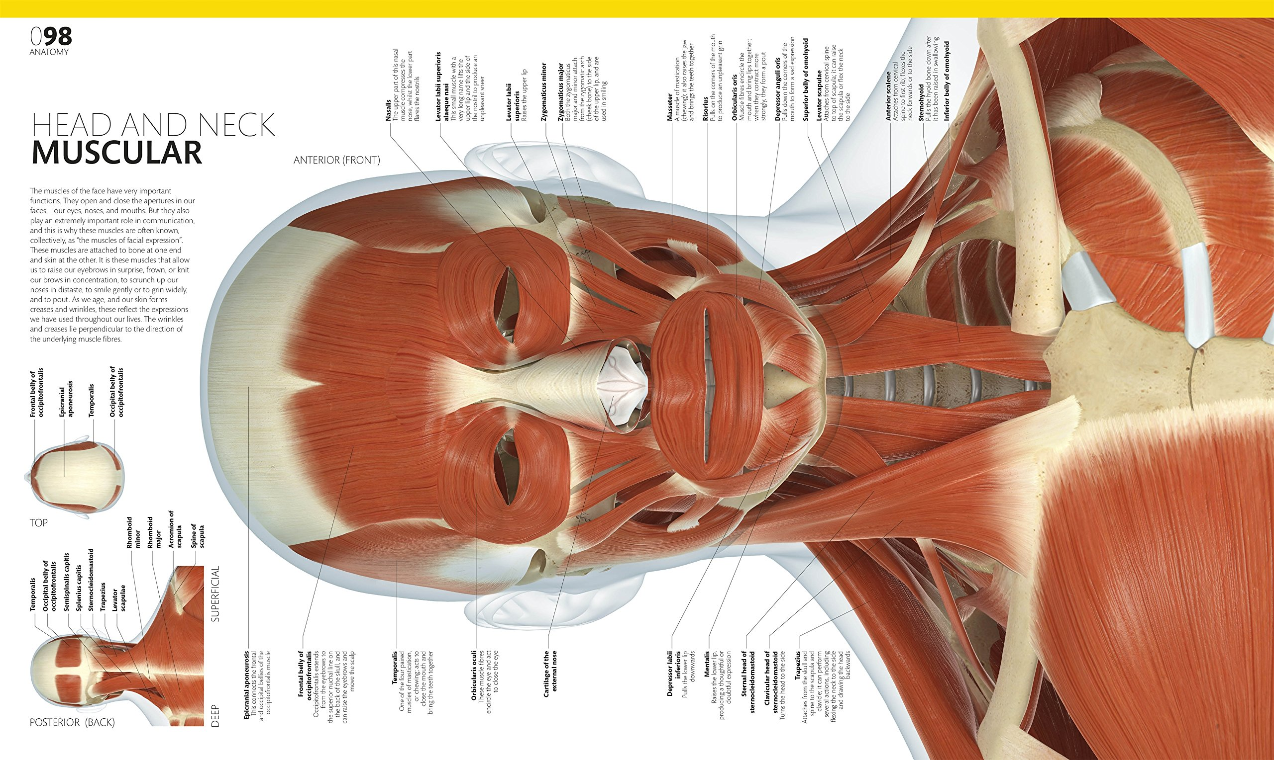 Complete Human Body The Definitive Visual Guide Alice M Roberts