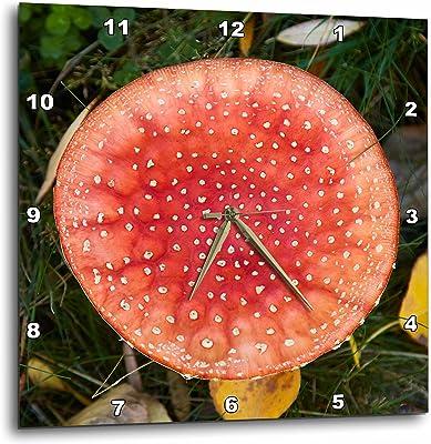 3dRose Danita Delimont - Fungi - Toadstool fungus close up, near Twizel, South Island, New Zealand - 15x15 Wall Clock (dpp_257356_3)