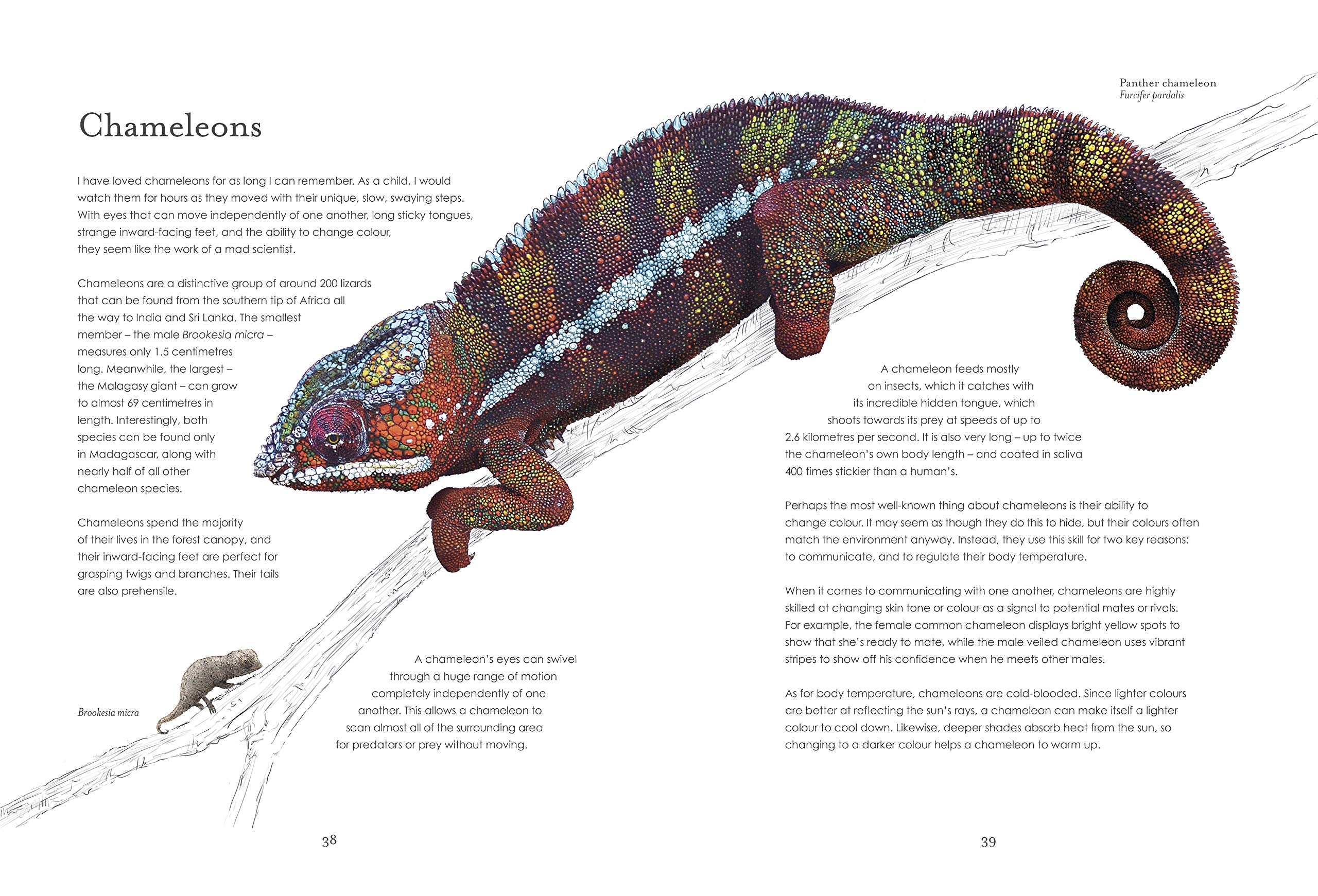 Hidden Planet: An Illustrator's Love Letter to Planet Earth: Rothery, Ben:  9780241361009: Amazon.com: Books