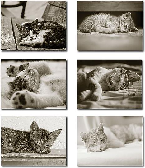 Kitten Notecards Blank inside Set of 5