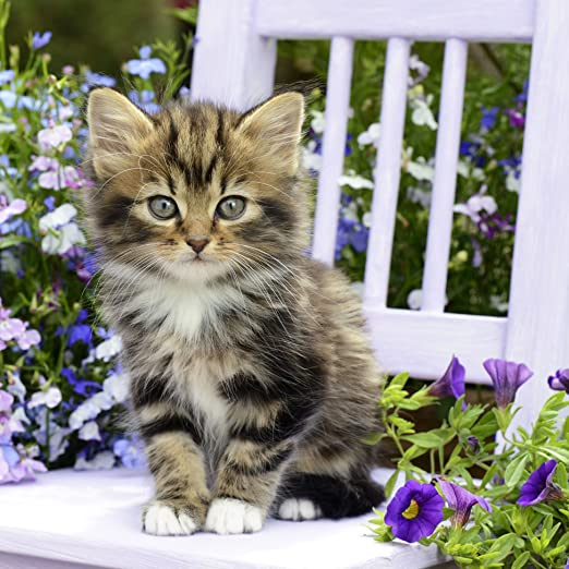 20 Servietten Kitty S/ü/ße Katze auf Stuhl Tiermotiv 33x33cm Tiere