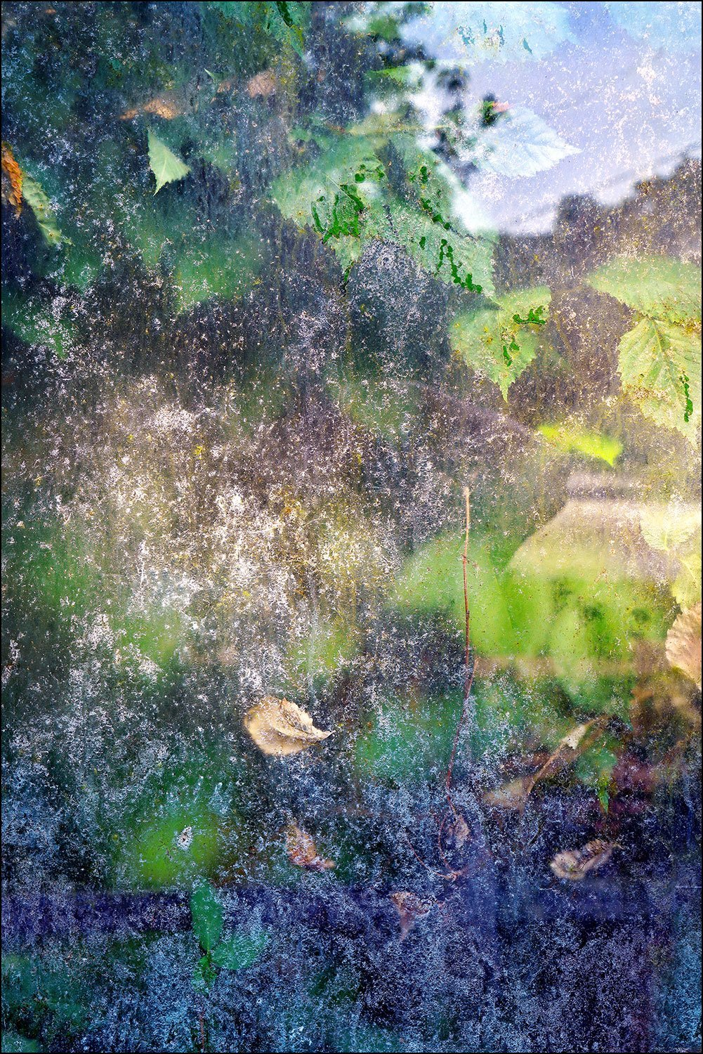 Photograph nature abstract of colorful greenhouse window with leaves by Bob Estrin Fine Art Photography