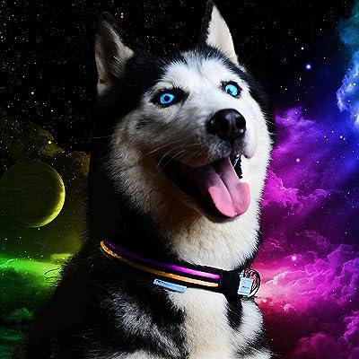 Pet Industries Metal Buckle LED Dog Collar
