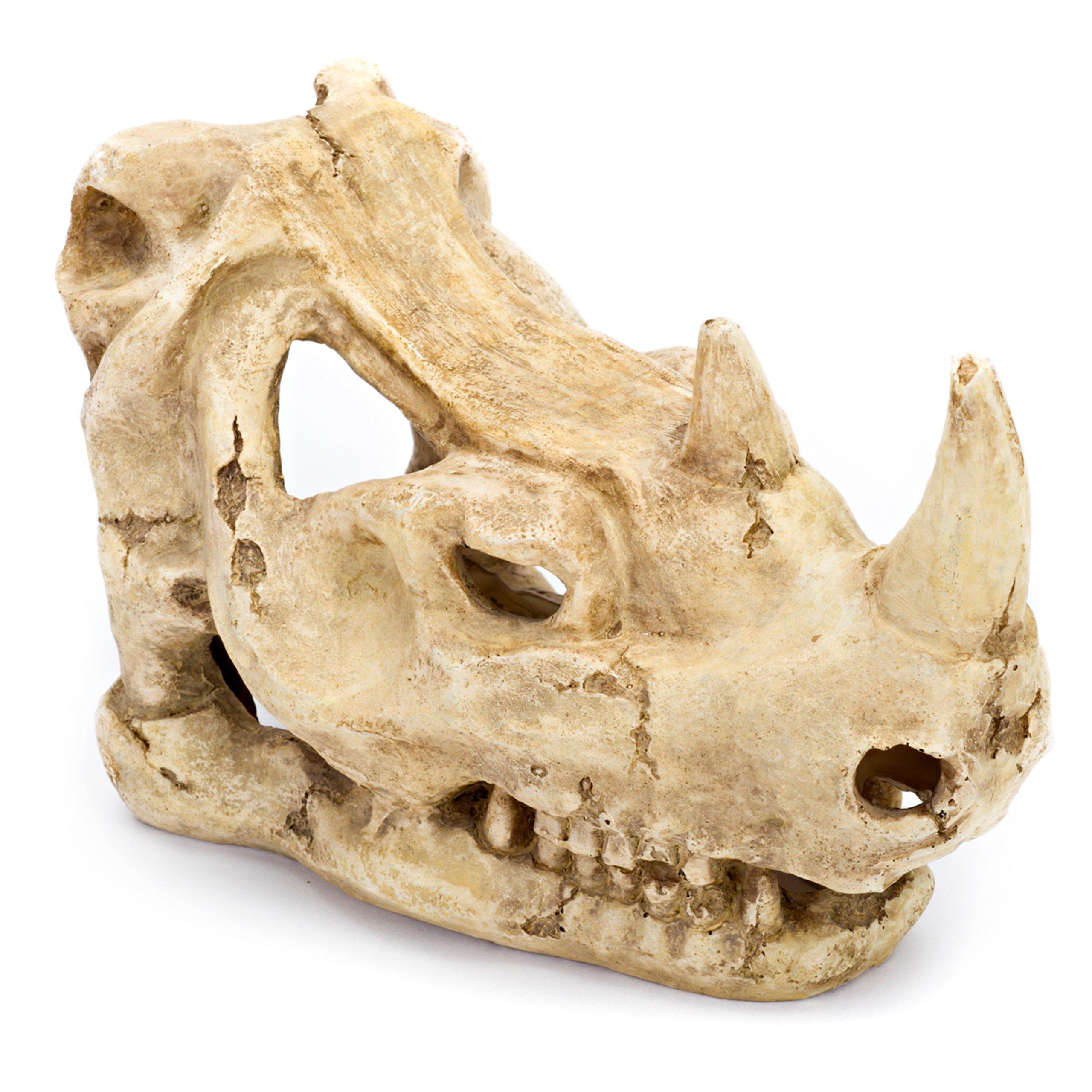 Penn Plax Rhino Skull Aquarium Decoration