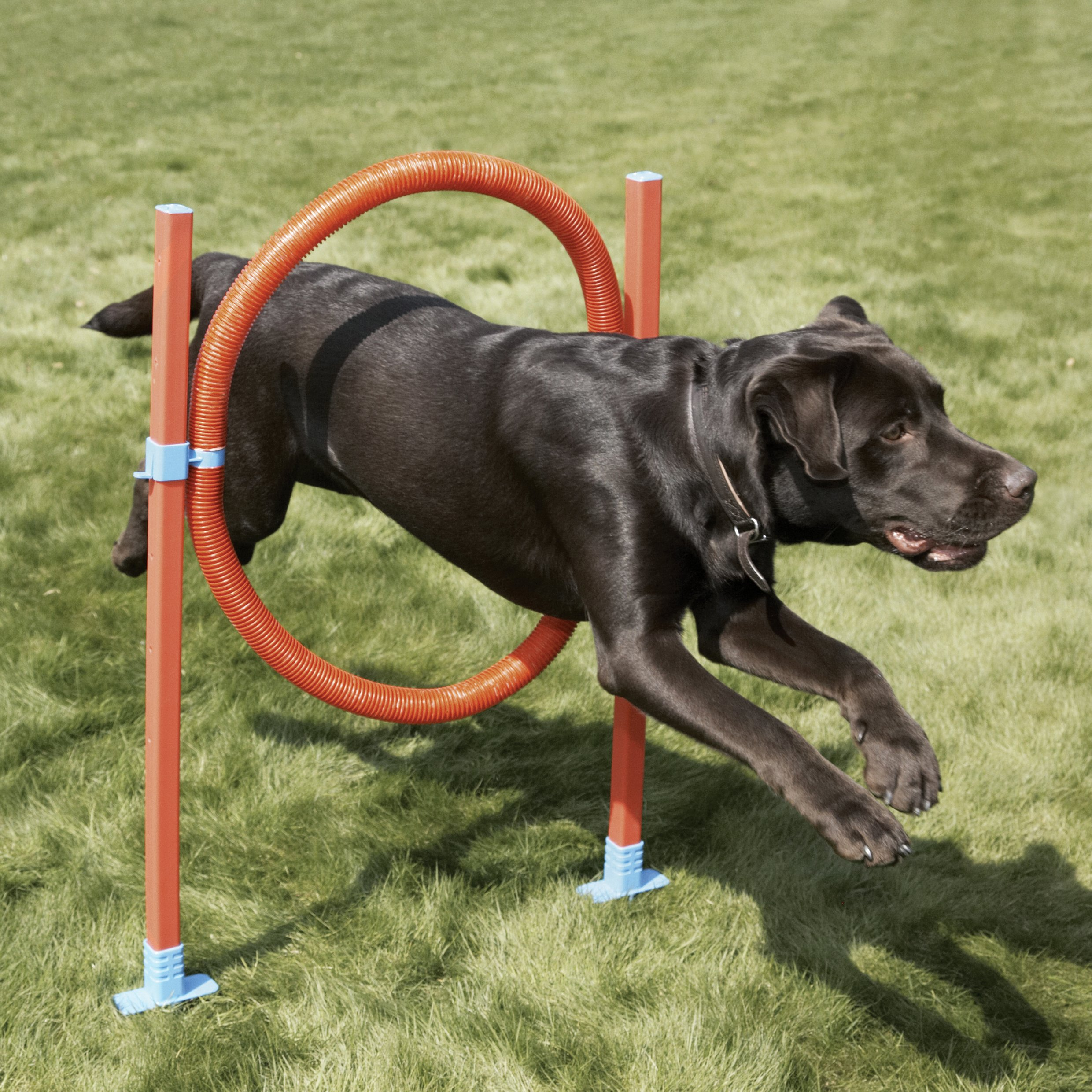 Agility Hoop Jump - Dog play & exercise toy by Rosewood Pet