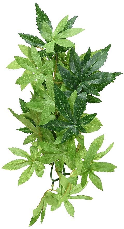 Amazon Com Exo Terra Silk Terrarium Plant Small Abutilon Pet
