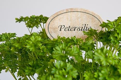 Giardino spina pesce erbe set basilico santoreggia dill