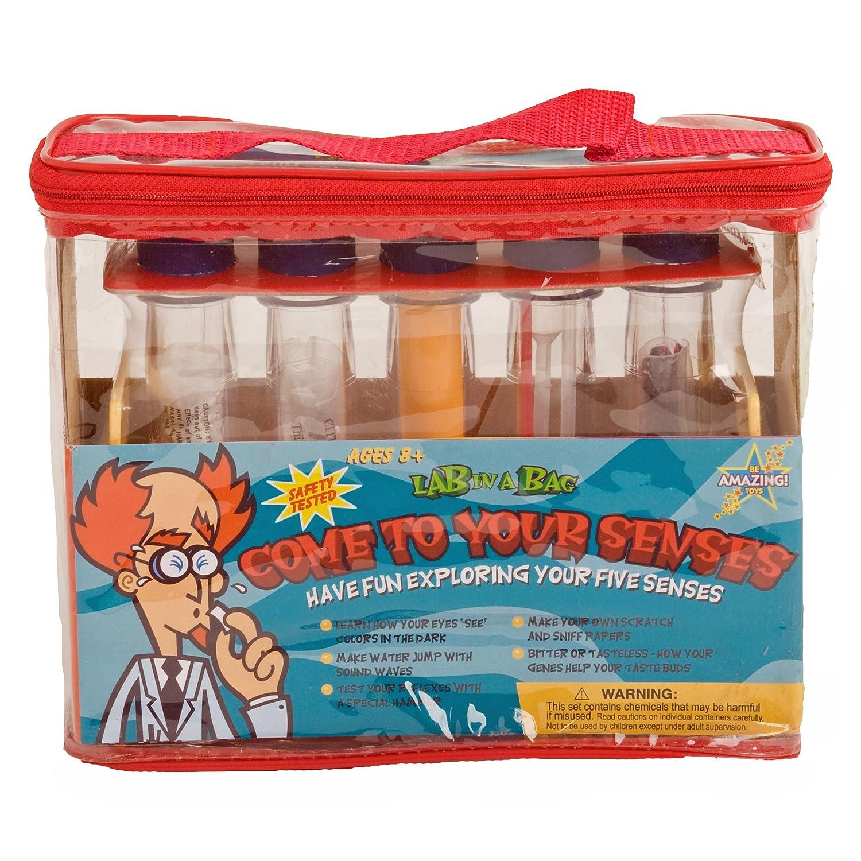格安販売の Lab In A Bag Come To A Your B004VQK662 Senses Kit- Lab (並行輸入品) B004VQK662, ファイルドショップ:4f7513e3 --- mrplusfm.net