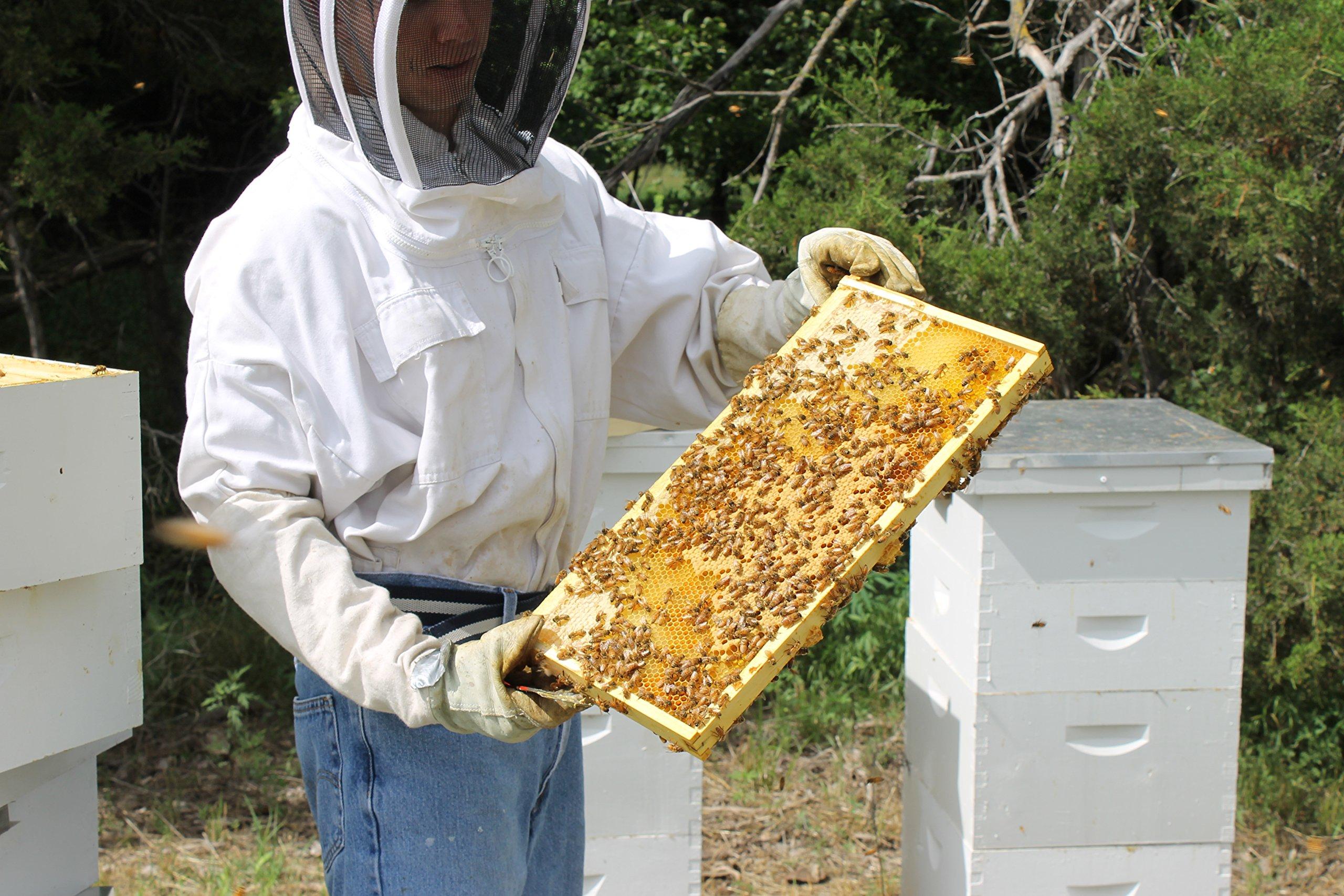 Raw Honey Pure Natural Nebraska Honey One 2lb Jar by Prairie River Honey Farm (Image #7)