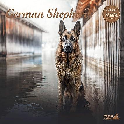 motivo pastore tedesco Calendario 2020