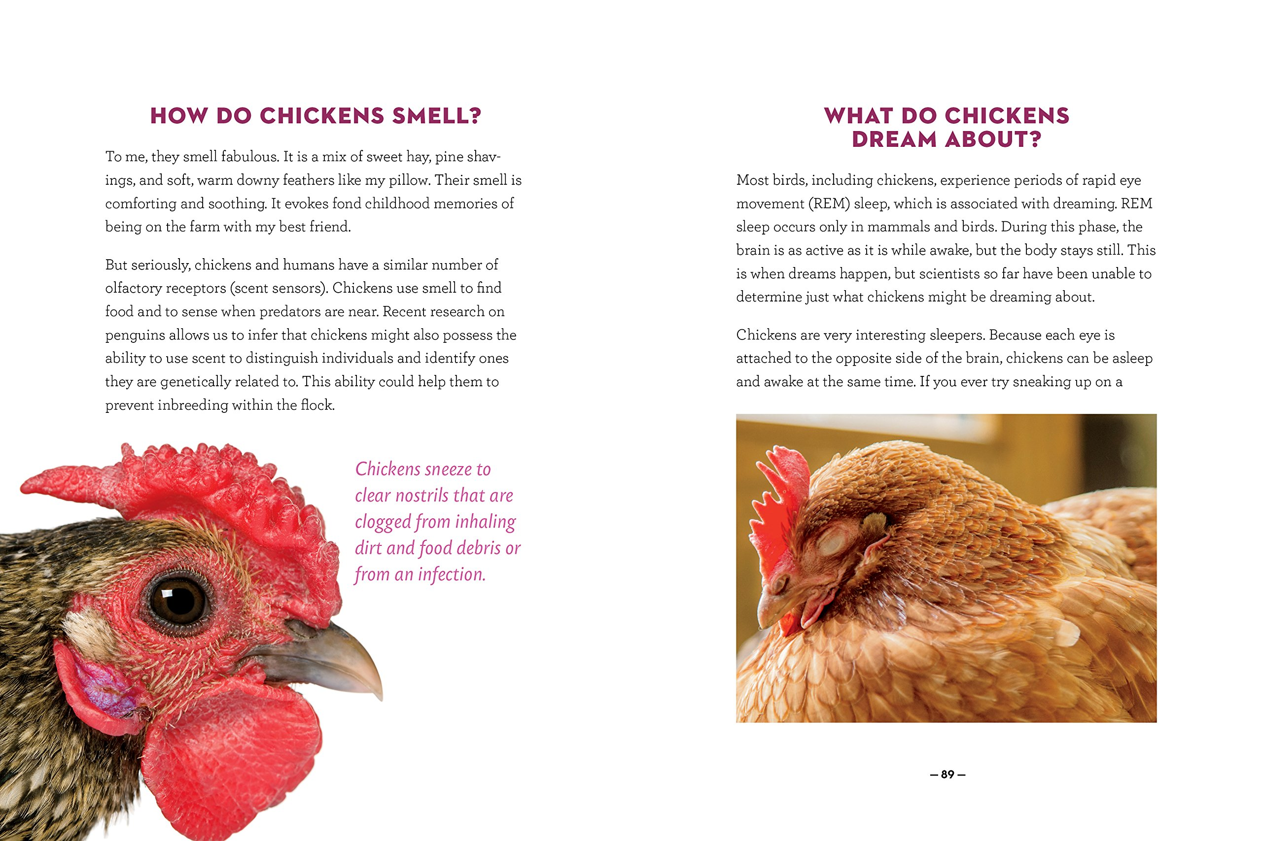 how to speak chicken why your chickens do what they do u0026 say what