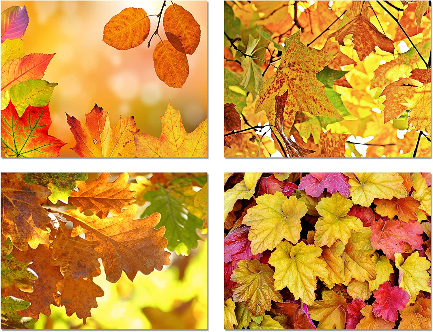 Amazon Com Fall Leaves Blank Note Cards 12 Pack Greeting Cards With Envelopes 4 Unique Designs 5 5 X4 25 12 Pack Office Products