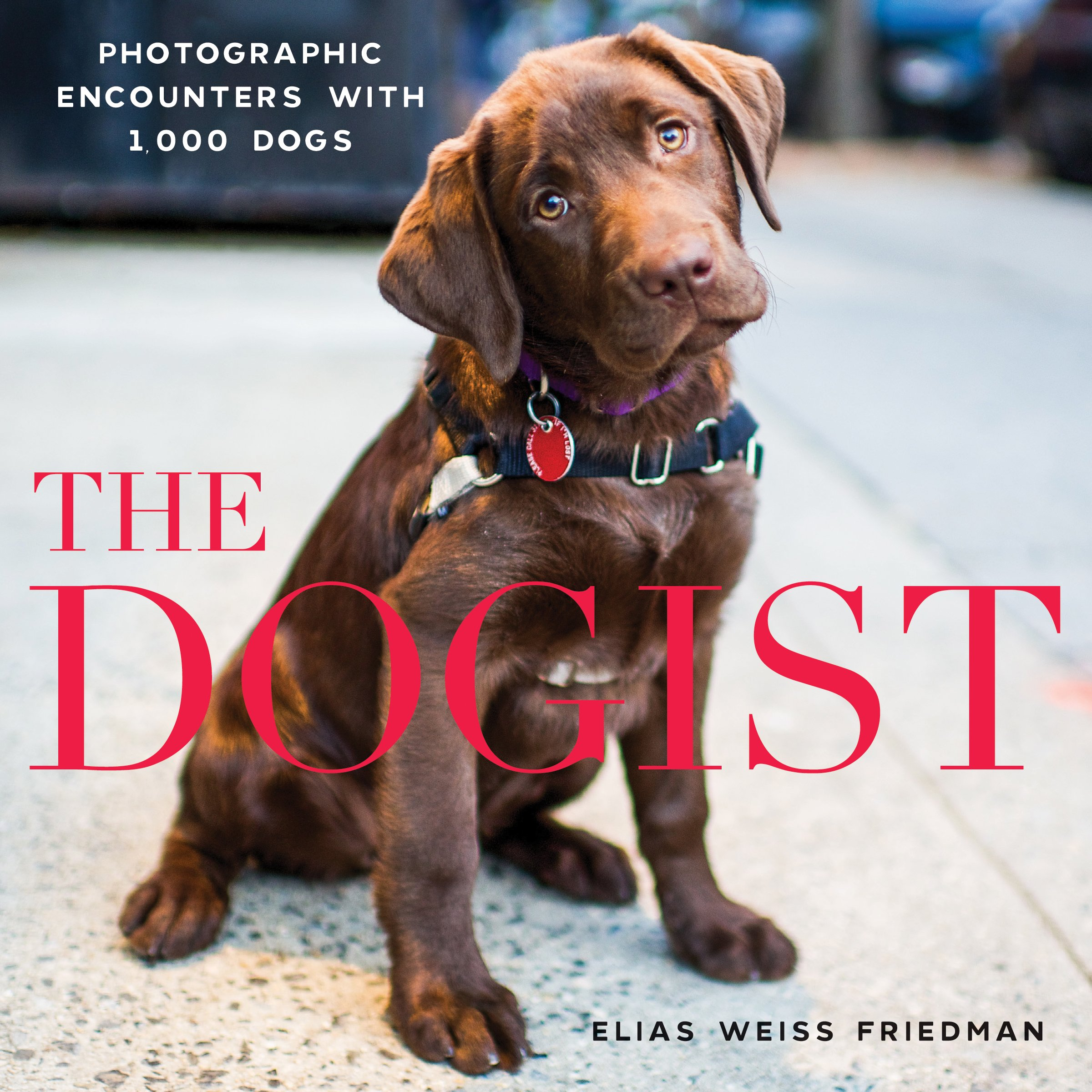 Amazon: The Dogist: Photographic Encounters With 1,000 Dogs  (9781579656713): Elias Weiss Friedman: Books