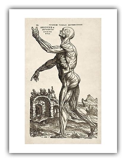 Amazon.com: Andreas Vesalius Human Anatomy Print : \