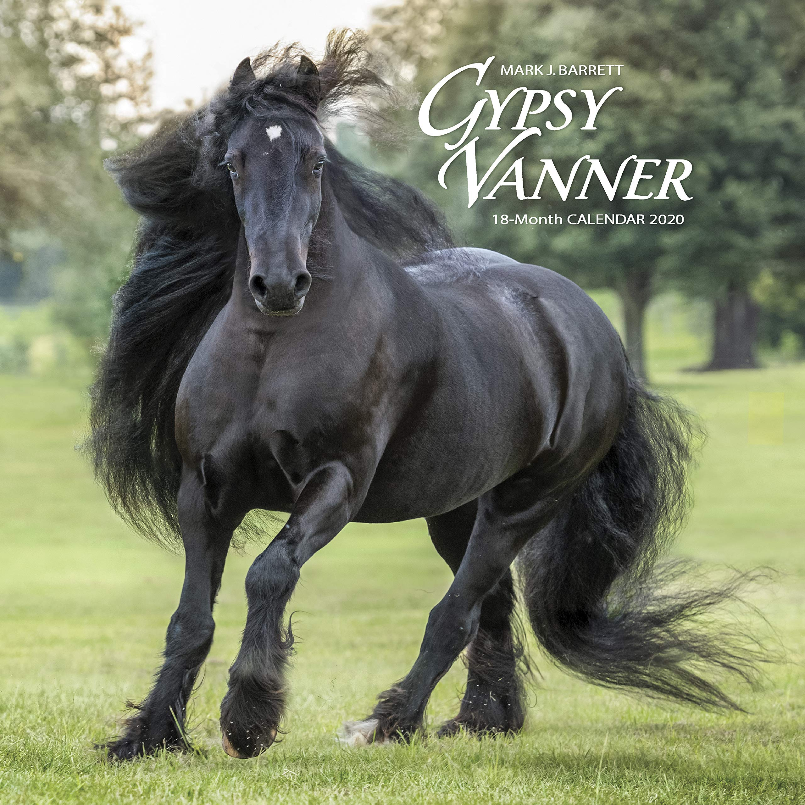 Horse Calendar 2020 Gypsy Vanner Horse 2020 Wall Calendar: Willow Creek Press