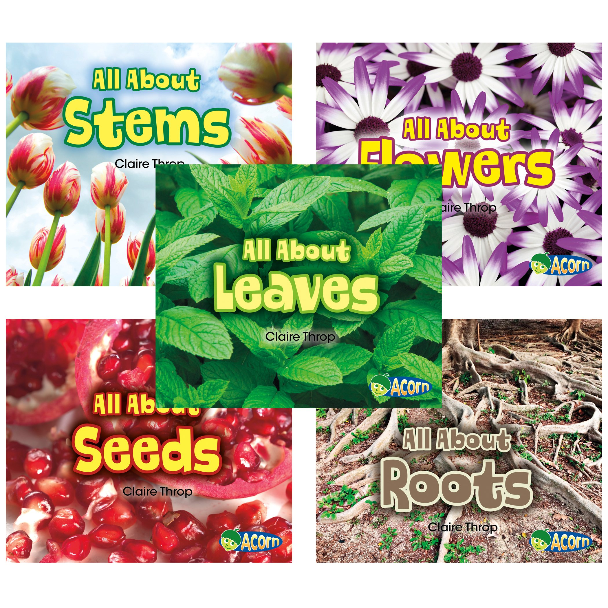 All About Plants pdf