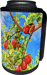 3dRose Danita Delimont - Fruits - Jonagold Apples on Trees, Yakima Valley, USA - Can Cooler Bottle Wrap (cc_231826_1)