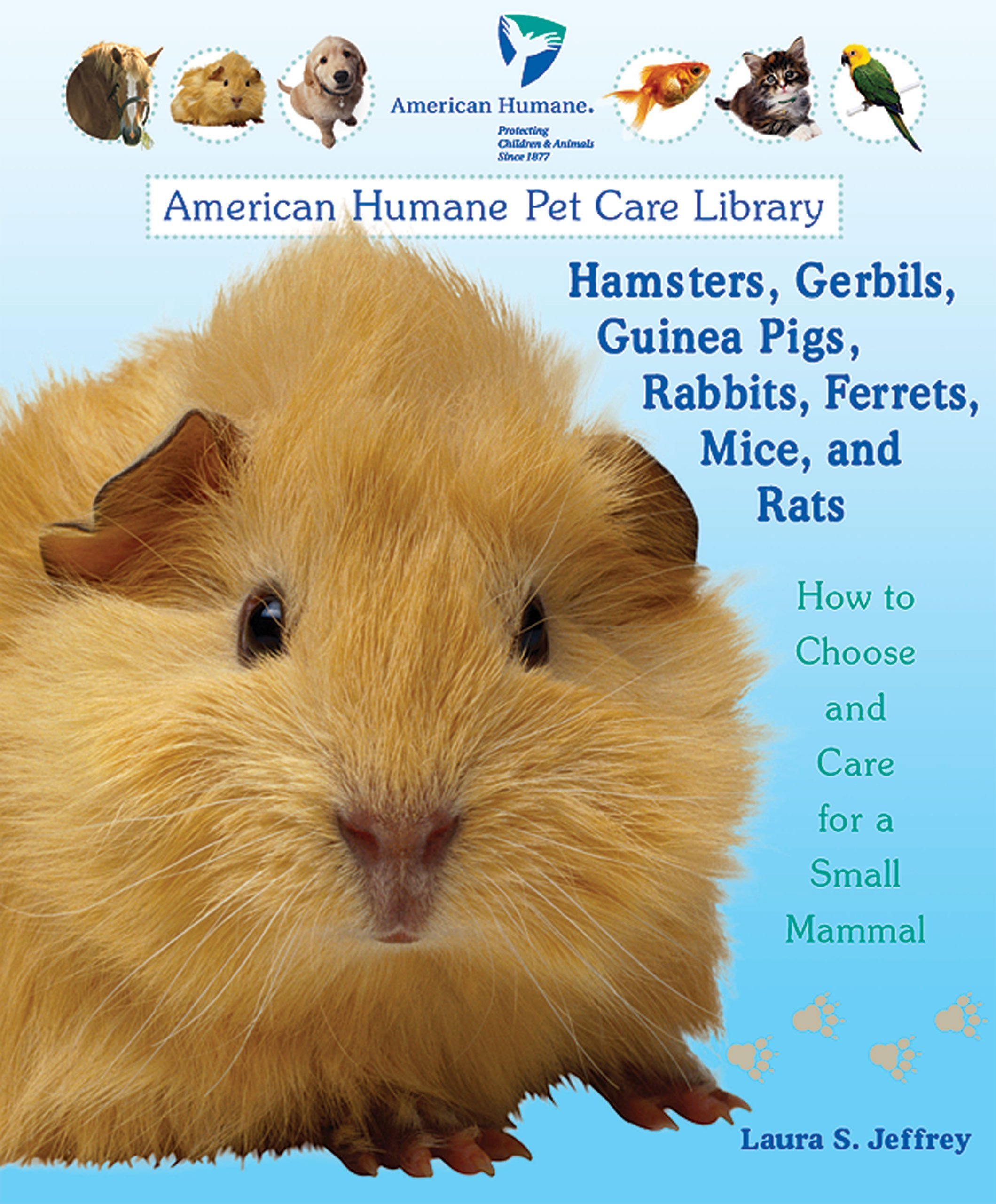 Uncategorized Hamsters And Guinea Pigs hamsters gerbils guinea pigs rabbits ferrets mice and rats how to choose care for a small mammal american humane pet c