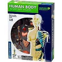 Thames & Kosmos 260830 Juguete Modelo anatomía