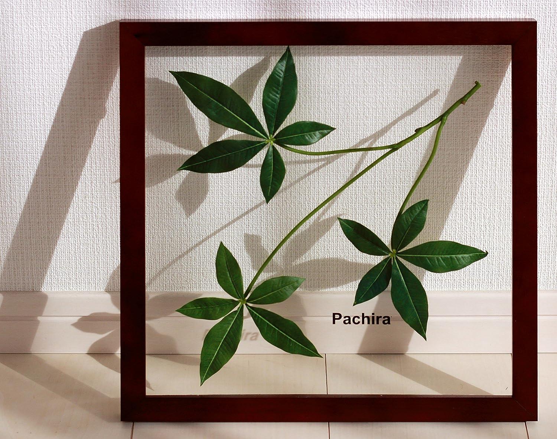 リーフパネル Forest Deco Pachira(パキラ)/ 絵画 壁掛け のあゆわら B00C2S2Q6Y