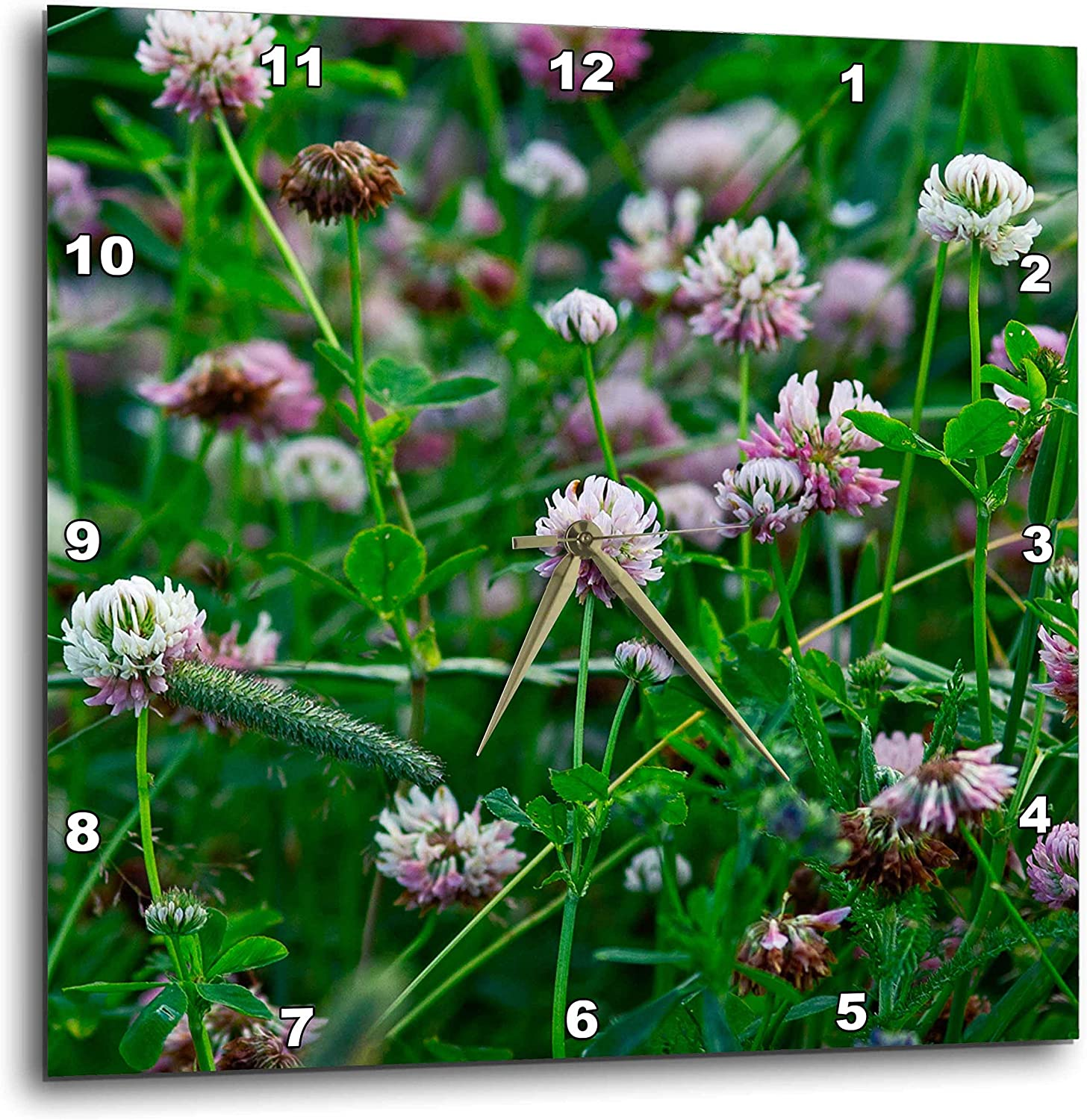 3dRose Clover Flowers of Pale Pink Color, Green Stems and Leaves - Wall Clocks (DPP_339908_3)