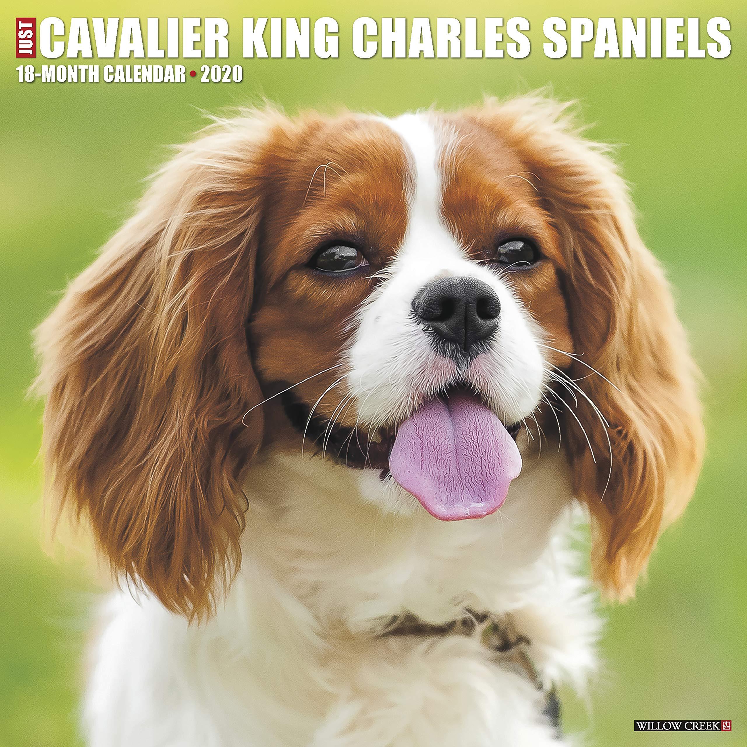 Amazon Just Cavalier King Charles Spaniels 2020 Calendar Willow Creek Press Breeds