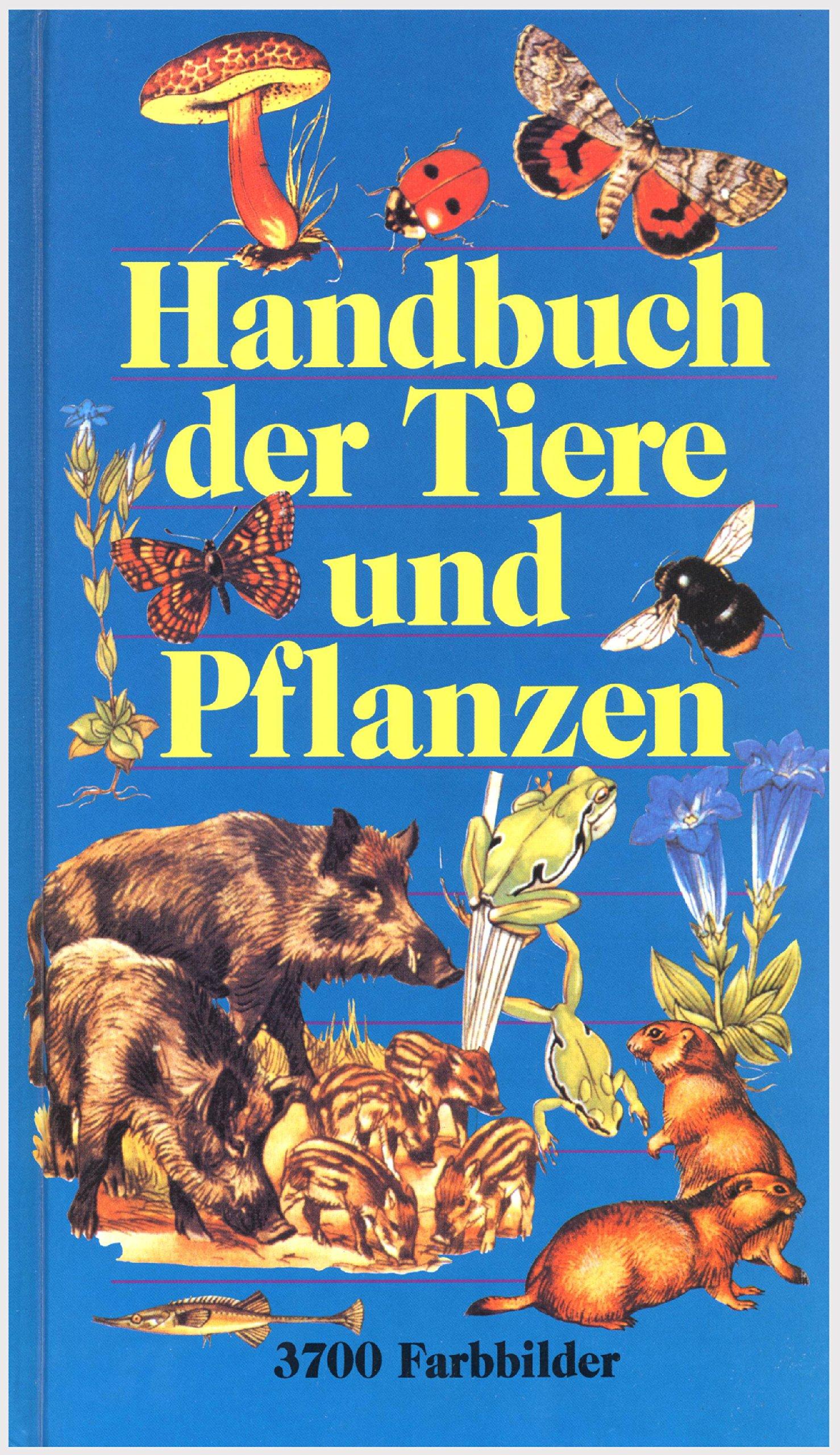 Charmant Tierfarbbild Zeitgenössisch - Framing Malvorlagen ...