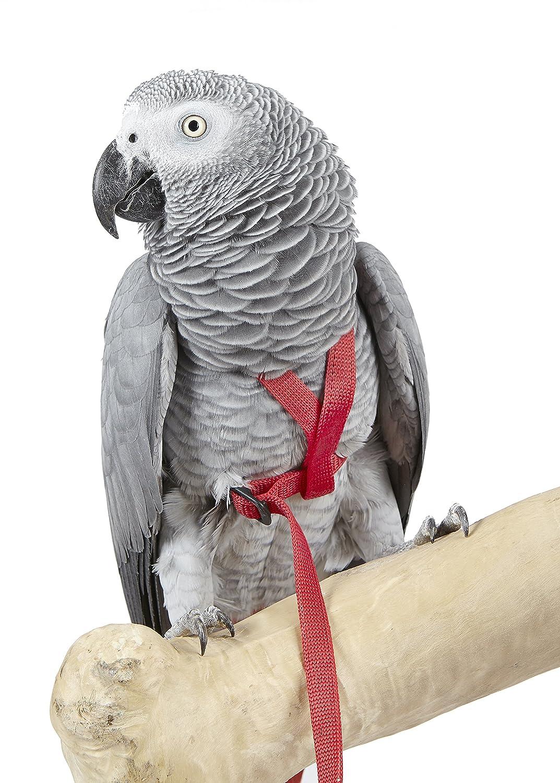 Arnés para pájaros de aventura, tamaño mediano, color: Amazon.es ...