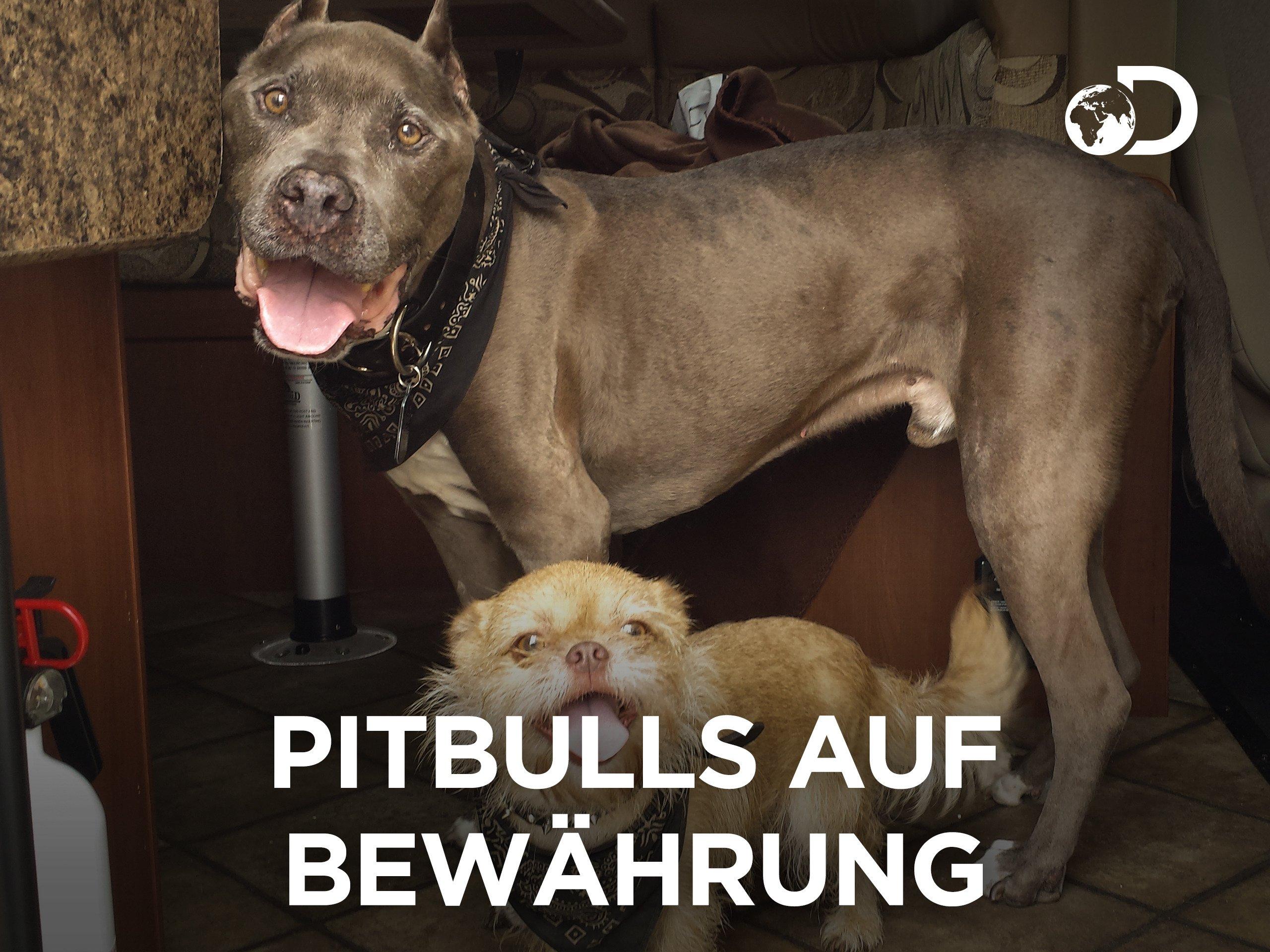 Amazonde Pitbulls Auf Bewährung Season 6 Ansehen Prime Video