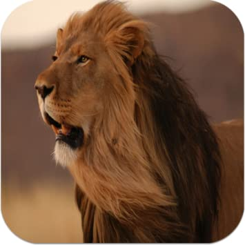 Amazon Com Angry Roaring Lion Live Wallpaper Appstore For Android