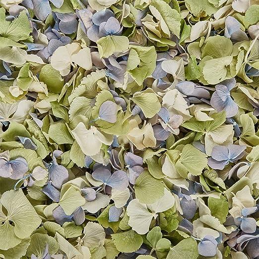 Confeti de pétalos de hortensia, biodegradables, para bodas ...