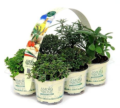 Vasi Piante Aromatiche.Pianta Aromatiche N 6 Vasi X 2 Pack In Vaso Diam 9cm