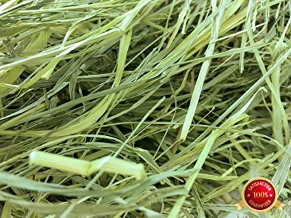 Amazon.com : Rabbit Hole Hay Second Cut Timothy Hay (1 lbs.) : Pet ...