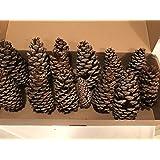 Wreaths For Door Natural 12-piece Ponderosa Pine Cone, Unscented