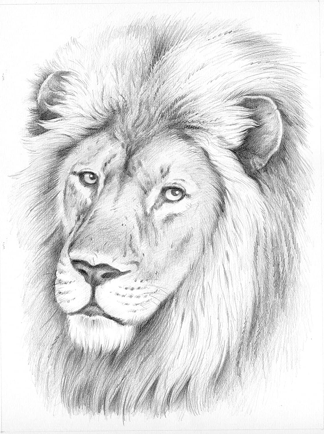 Reeves Lion Sketching by Numbers, Medium