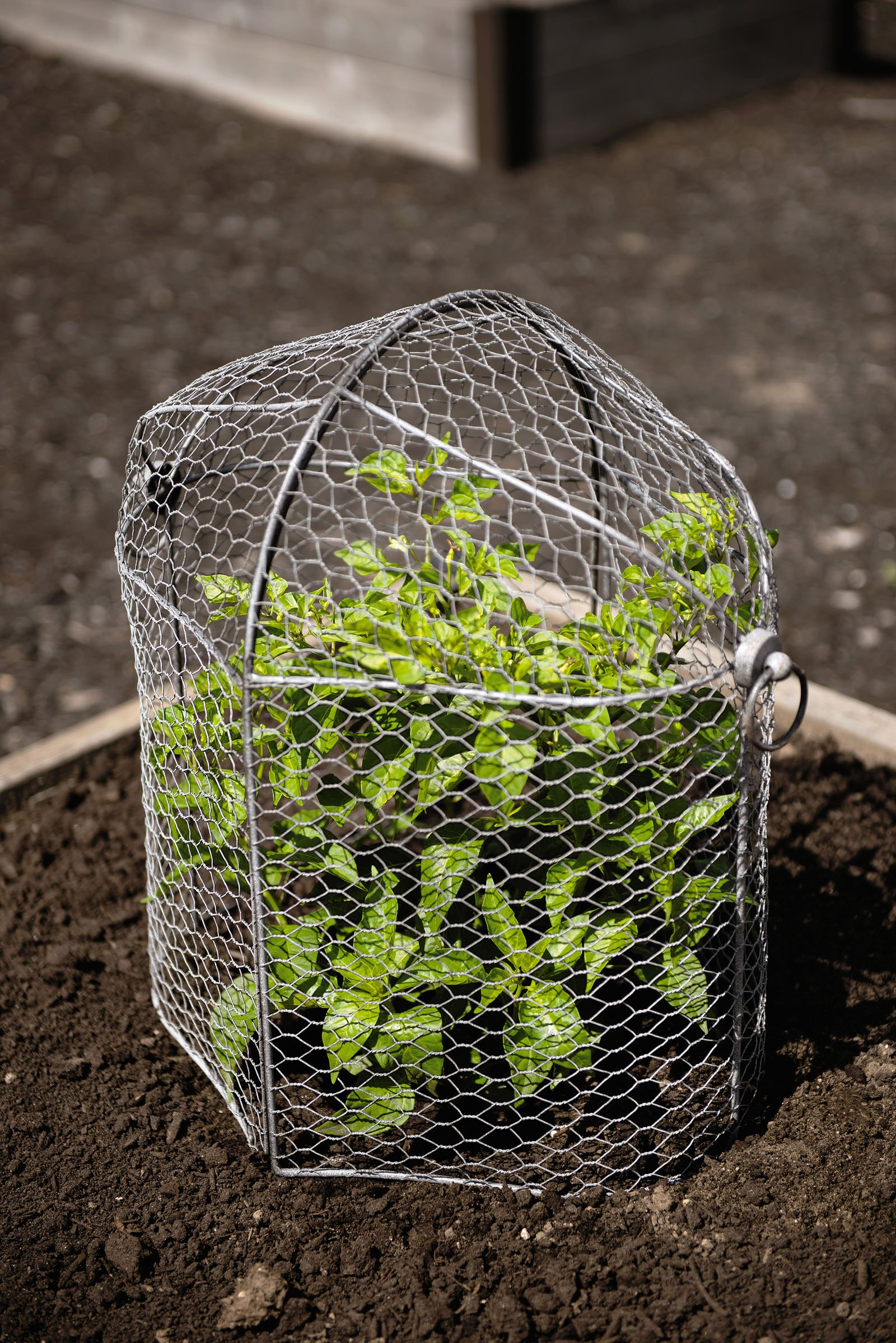 3-in-1 Chicken Wire Cloche