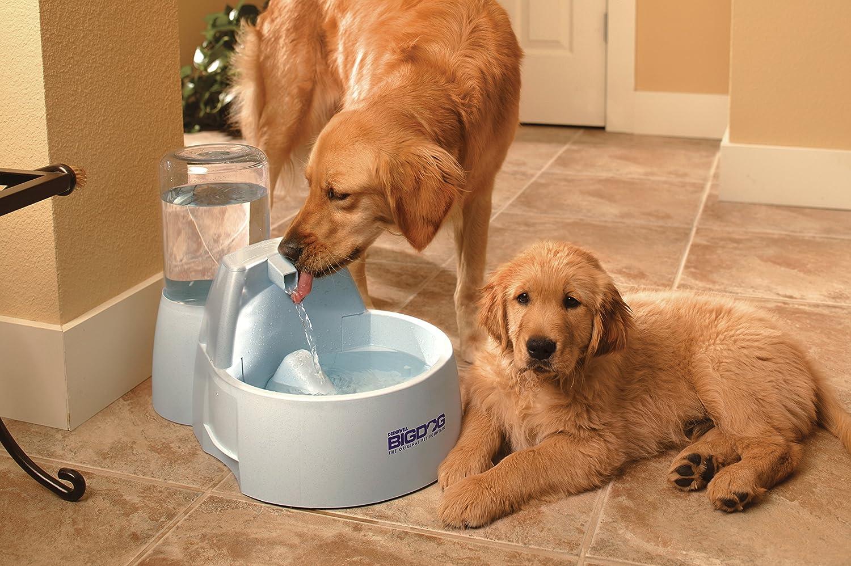 big dog water bowl