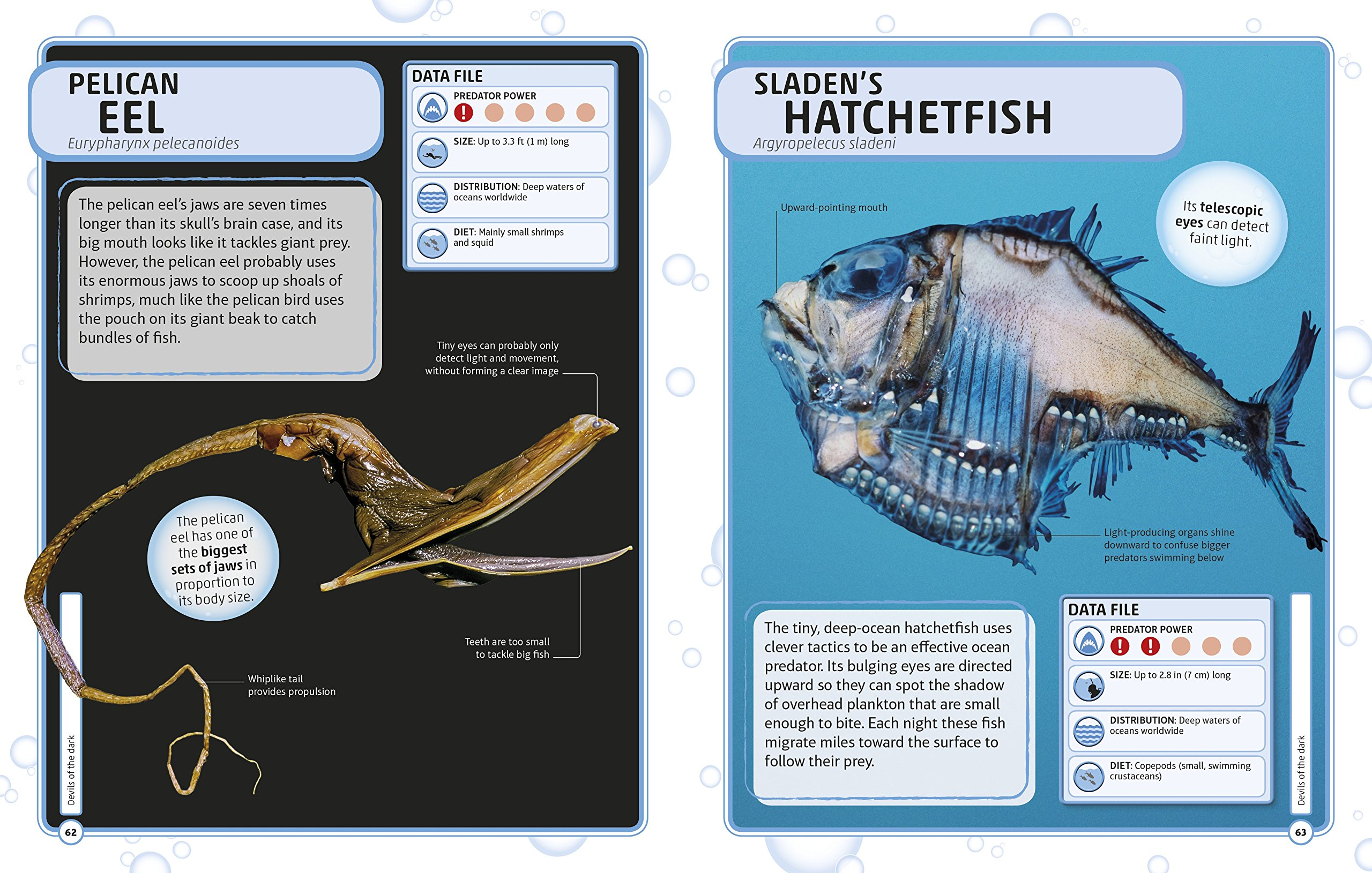 Sharks and Other Deadly Ocean Creatures Visual Encyclopedia by DK Children (Image #3)