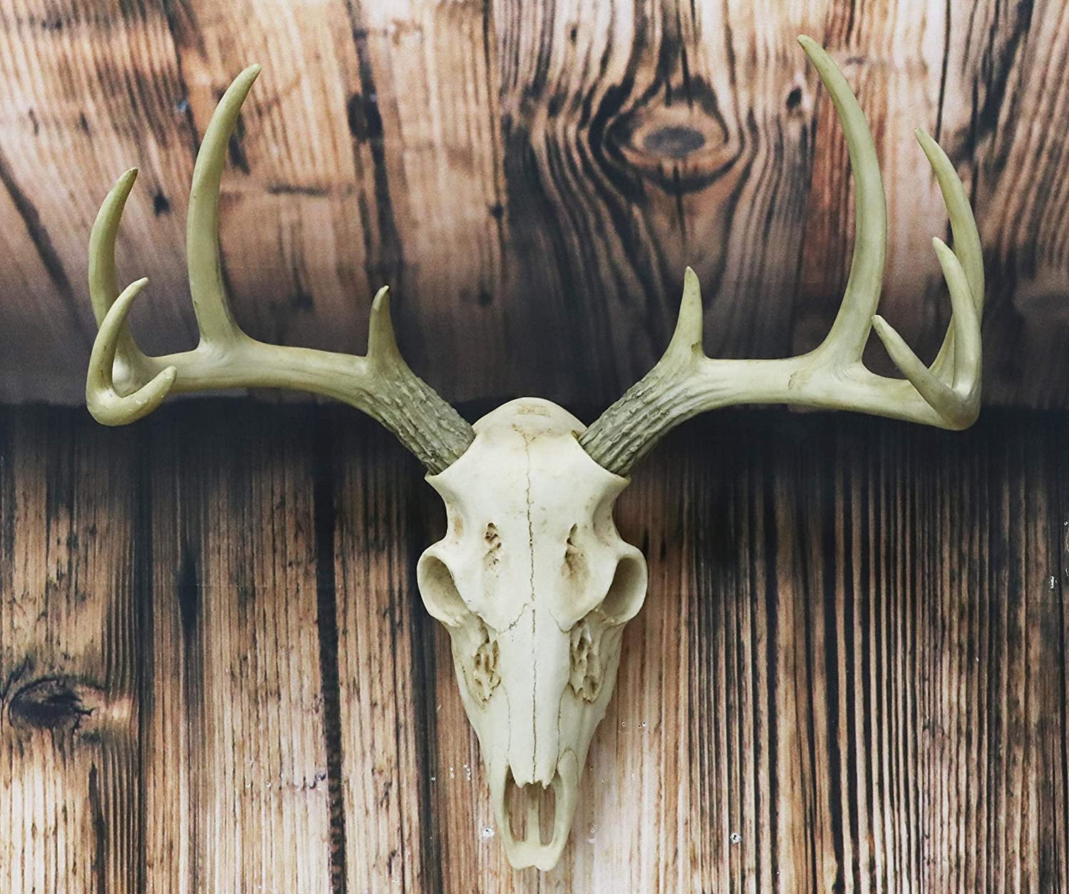 "Ebros Gift Rustic Hunter Deer 10 Point Buck Skull Trophy Antlers Wall Mounted Plaque Trophy Decor Figurine 14.25"" Long Hunter's Antler Rack Theme Deers Bucks Hunting Skulls Trophies Hanging Sculptures"