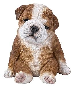 Sitting Sleepy Bulldog Puppy