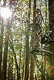 Summit Treestands Explorer SD Open Front Climbing