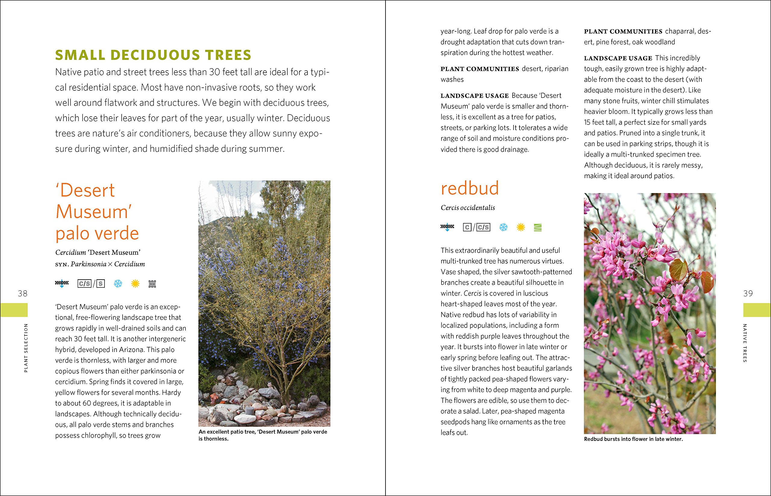 The Drought-Defying California Garden: 230 Native Plants for a Lush, Low-Water Landscape by Timber Press (Image #4)