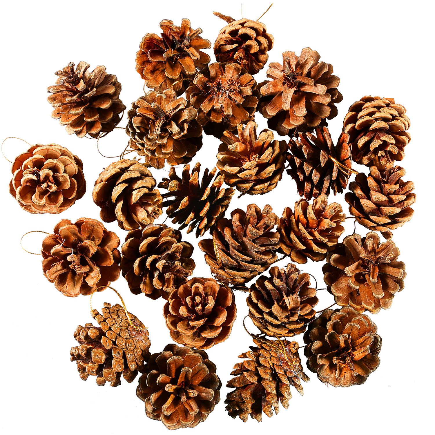 Coobey 24 Pieces Pine Cones Ornament Natural PineCones With String Pendant Crafts for Gift Tag Tree Party Hanging Decoration (Natural) by Coobey