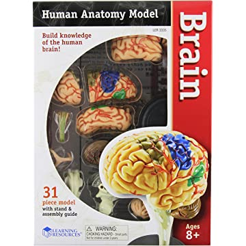 Learning Resources Human Anatomy