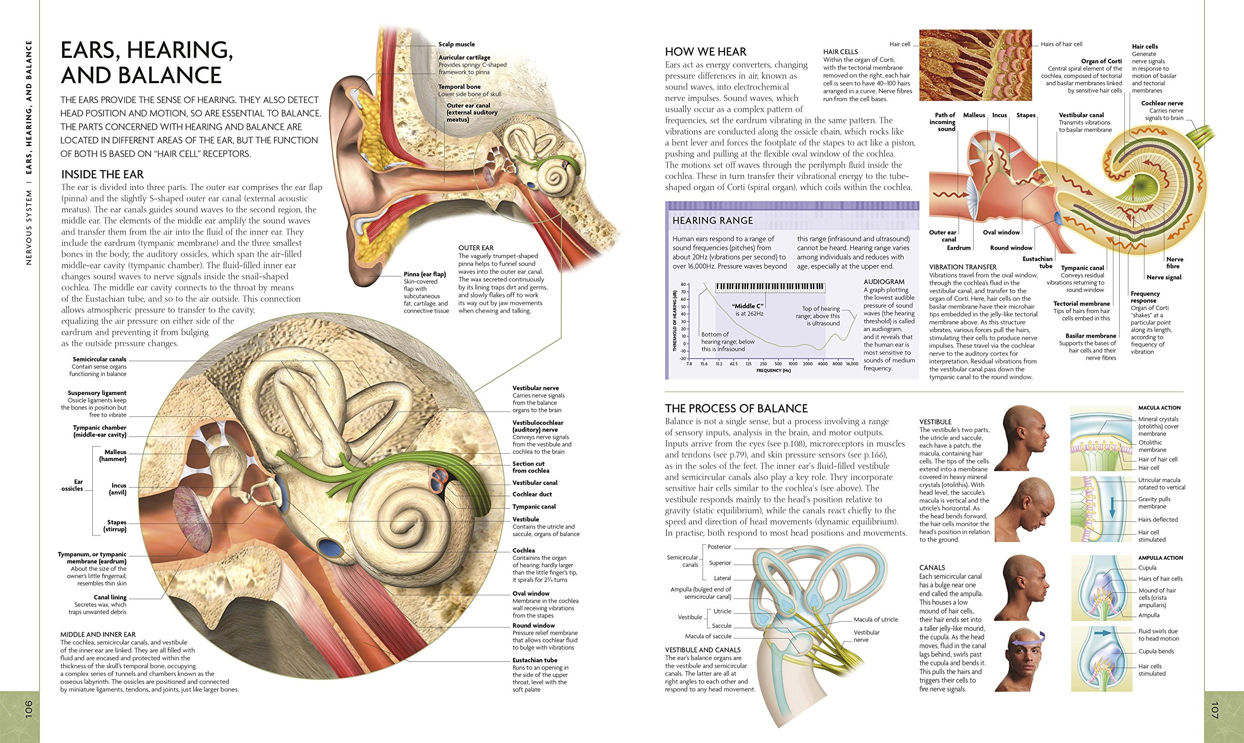 Buy The Human Body Book An Illustrated Guide To Its Structure 3d Plant Cell Diagram From Textbook Image Gallery Function And Disorders Dk Medical Reference Online At Low Prices In India