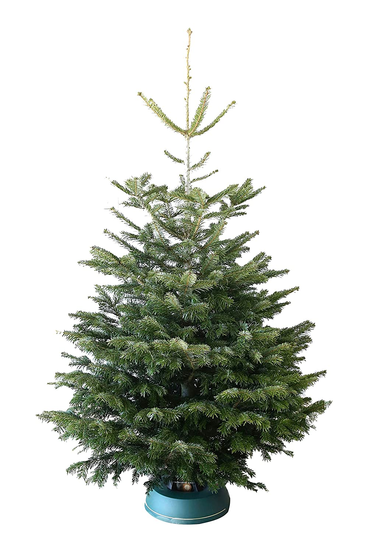 Echter Weihnachtsbaum Nordmanntanne H=ca. 1,65-1,80 m Premium frisch ...