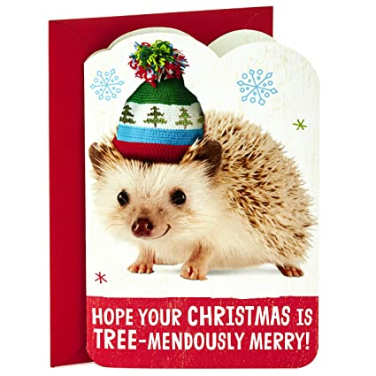 5bd45e2253d0e Image Unavailable. Image not available for. Color  Hallmark Singing Hedgehog  Christmas ...
