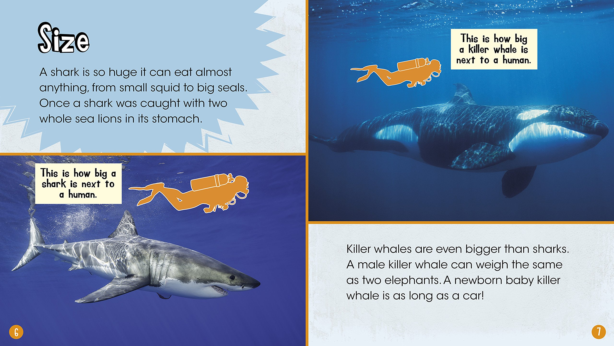Beaches] Killer whale great white shark size